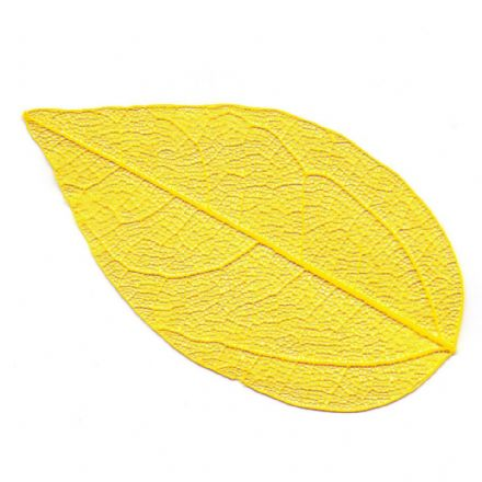 Skeleton Leaves Yellow  4-6 cm, 10 peces  (24101)